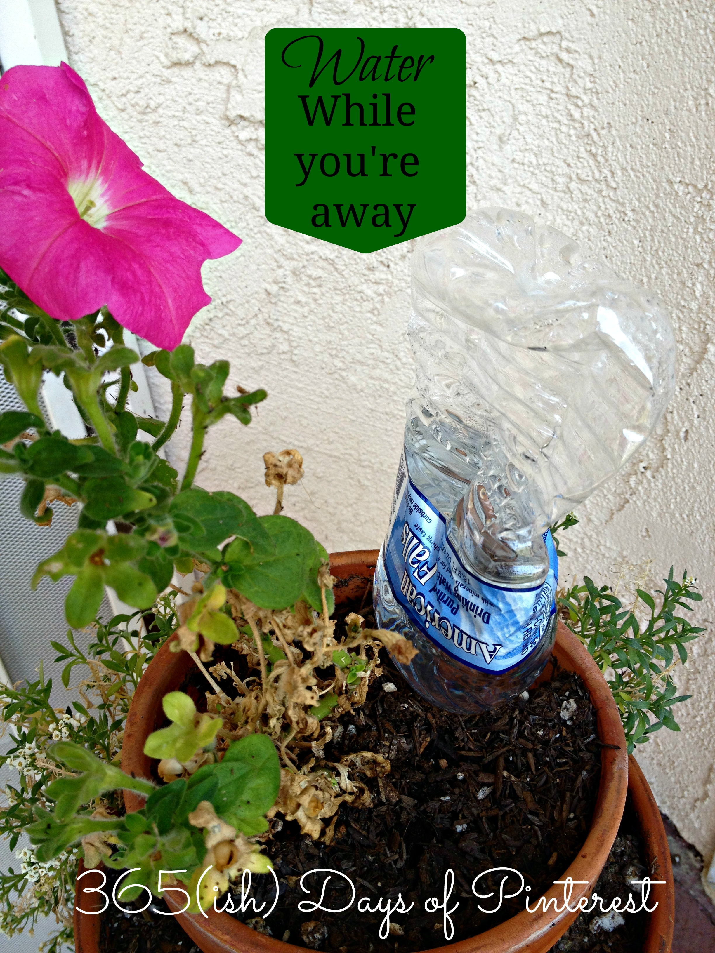 Vol 2 Day 11 How To Water Plants While On Vacation