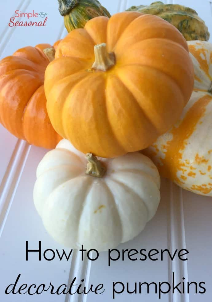 How to Preserve Pumpkins and Decorative Gourds